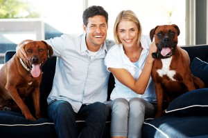 CoupleWithBoxerDogsOnCouch-300x200